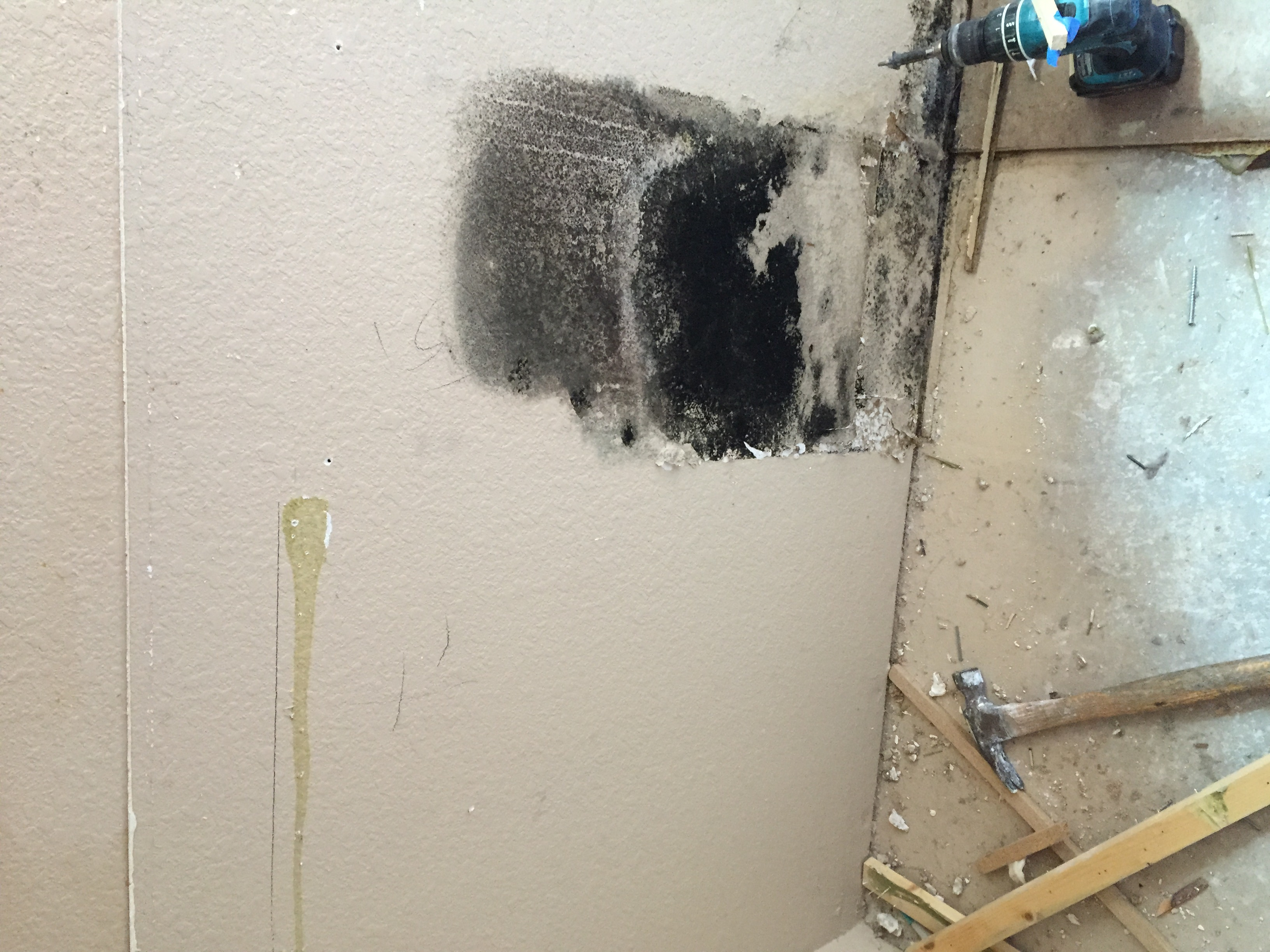 Black Mold Growing In Wall